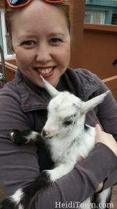 baby goat heidiTown