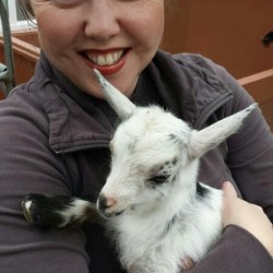 baby goat heidiTown