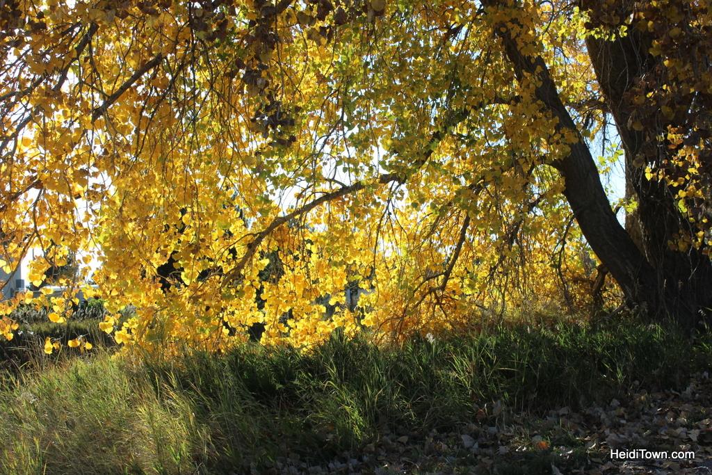 Colorado leaf walk October 19, 2014. HeidiTown (23)