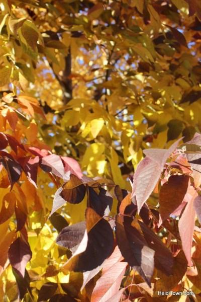 Colorado leaf walk October 19, 2014. HeidiTown (48)