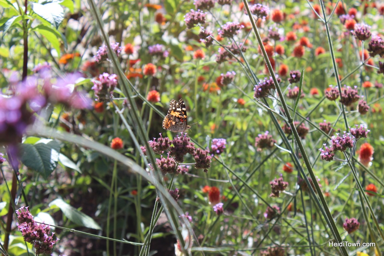 A fall visit to the Denver Botanic Gardens. HeidiTown (4)