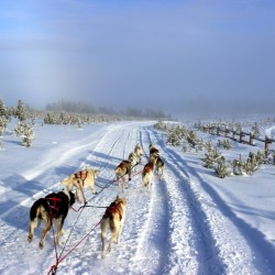 Dog sledding at Snow Mountain Ranch. HeidiTown.com
