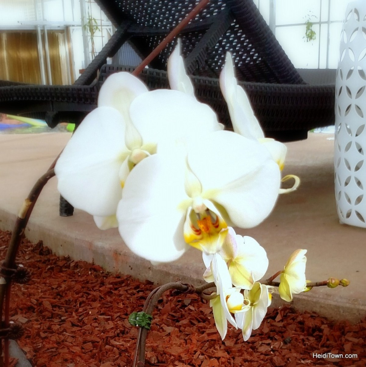 An oasis in Southern Colorado. An orchid at Sand Dunes Swimming Pool & Hot Springs. HeidiTown.com