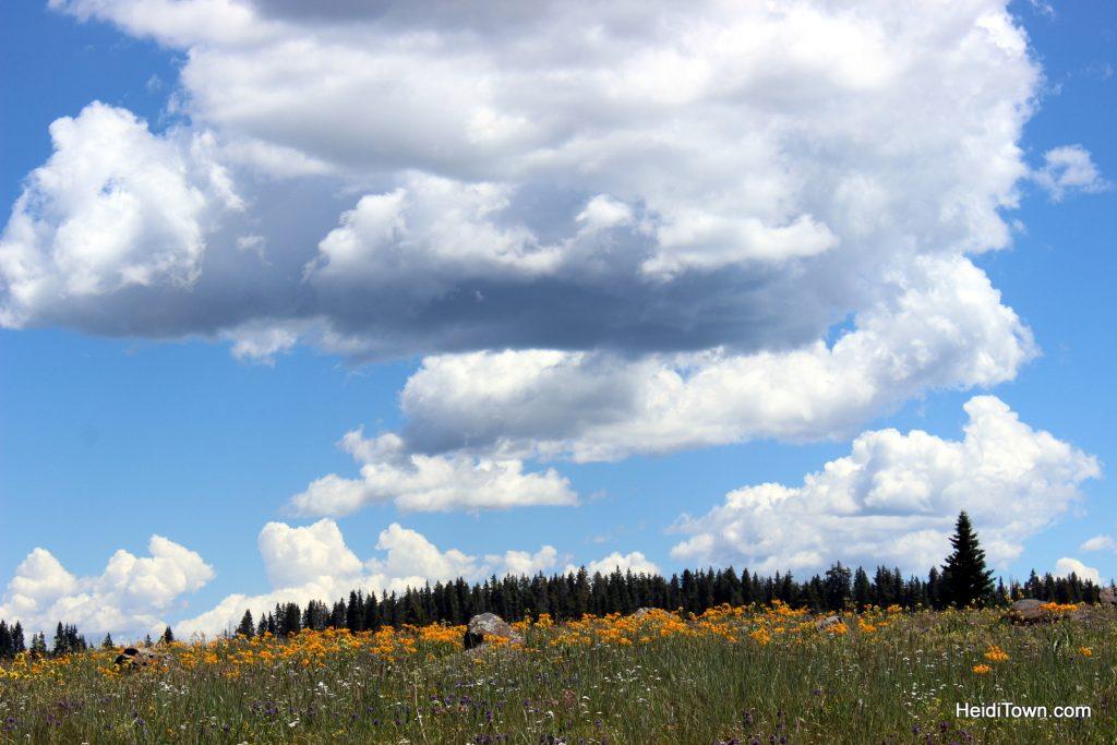 Wildflowers & wild chipmunks on Grand Mesa. HeidiTown.com (6)