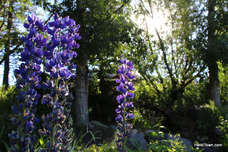 Six Reasons to Visit Steamboat Springs, flower gardens outside of Strings. HeidiTown.com