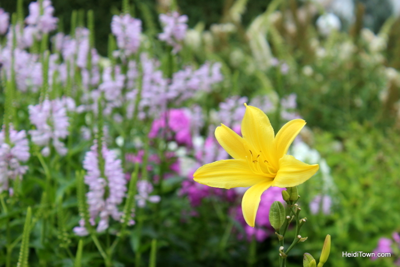 Shooting All the Flowers at Denver Botanic Gardens (1)