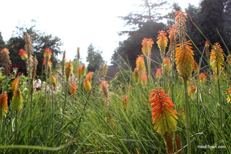Shooting All the Flowers at Denver Botanic Gardens (20)