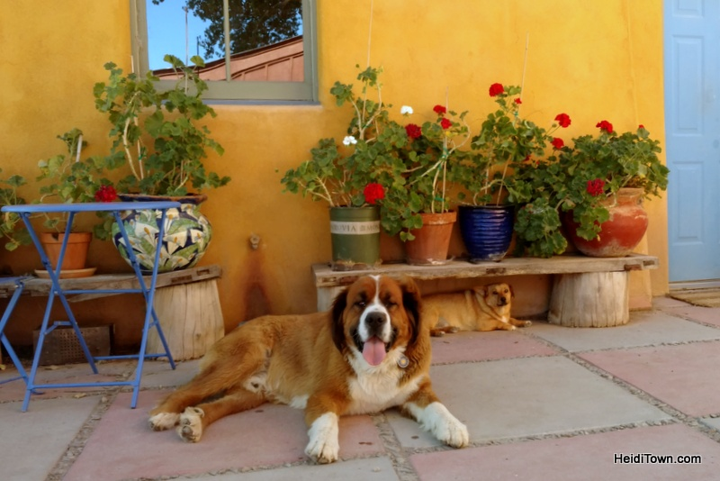 Take Road G to Wine Paradise, dogs at Sutcliffe