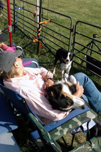 Dogs, Sheep & Meat Pies at the Meeker Sheepdog Trials (8)