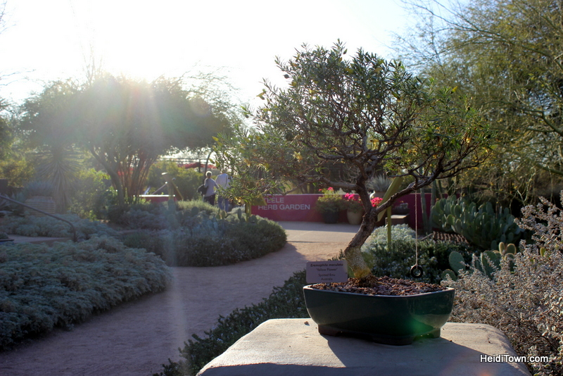 Visit Another Planet Arizona's Desert Botanical Garden. HeidiTown (1)