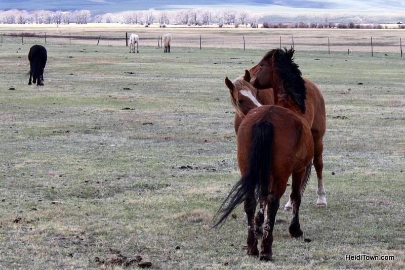 Visit 350 Wild Horses at Deerwood Ranch in Wyoming. HeidiTown 4