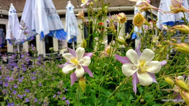 5 Picture Perfect Colorado Summer Towns, columbines bloom in Vail. HeidiTown.com
