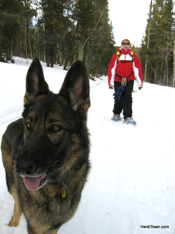 Dog is my Co-Pilot Photos 16. HeidiTown (2)