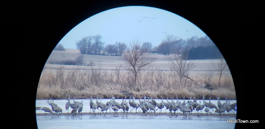 A Night with the Sandhill Cranes at the Crane Trust in Nebraska. HeidiTown (9)