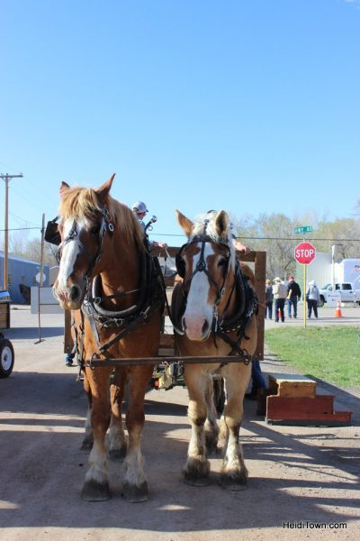 Craig & Maybell Horse Drives & Tacos in Northwest Colorado. HeidiTown (1)