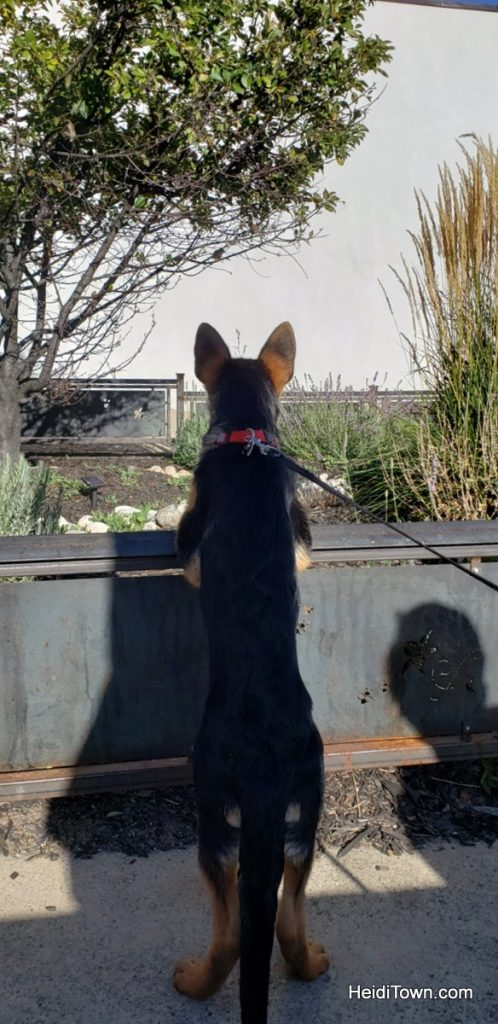 Salida, Colorado is for the Dogs Dog-Friendly Spots Around Town. HeidiTown (11)