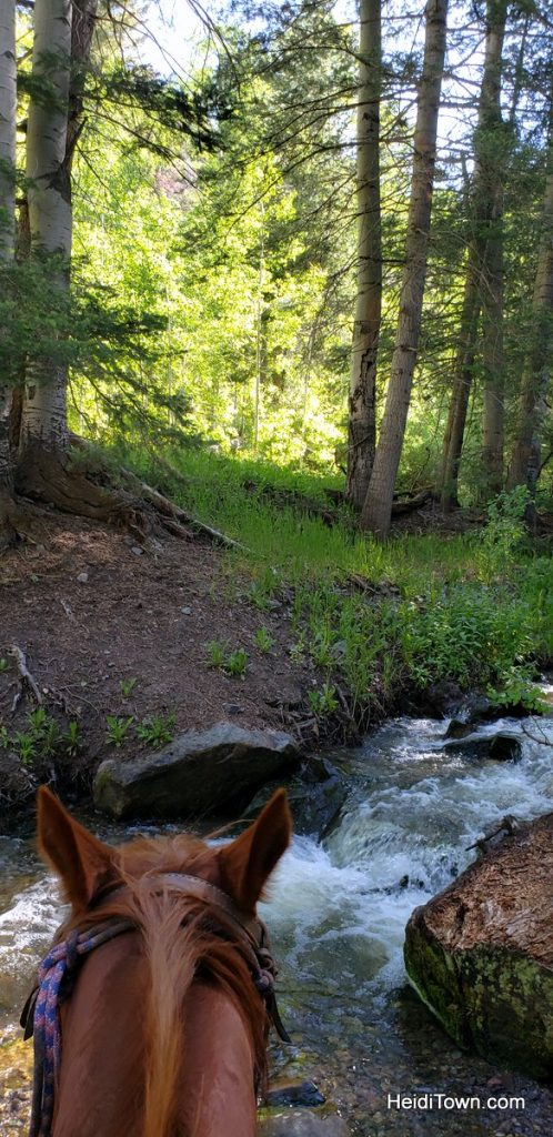 Trail Ride to the Top of the World with Action Adventures in Ouray. HeidiTown (3)