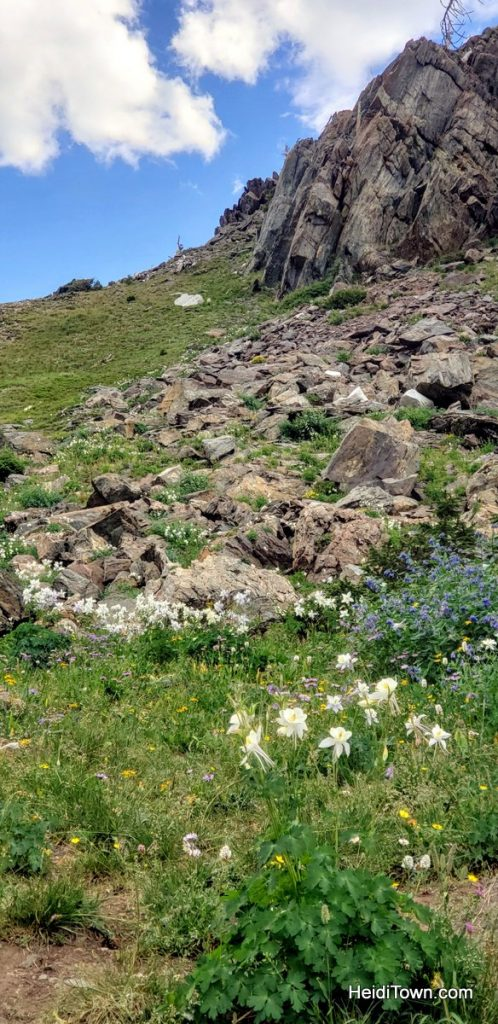 The Snowy Range in Living Color Wildflowers in Wyoming. HeidiTown (11)