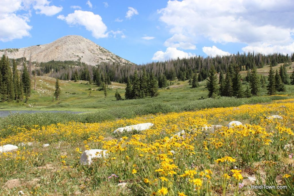The Snowy Range in Living Color Wildflowers in Wyoming. HeidiTown (22)