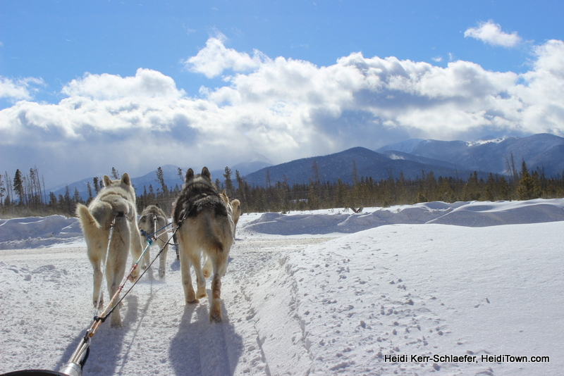 The Mayor's Travel Memories from the Road (Dog Sledding!), Dog Sleds of Winter Park 2013