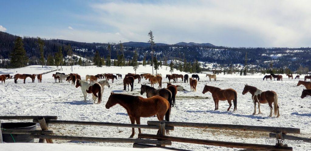 Hot Tubs & Horses at Vista Verde Ranch in Colorado. HeidiTown (11)