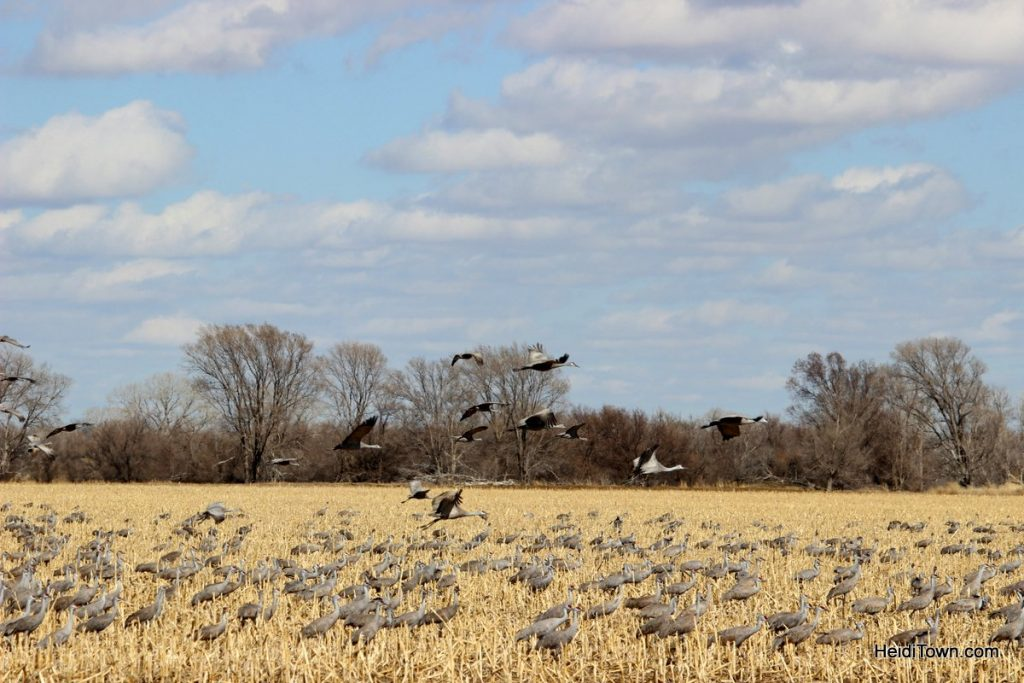 Commune with Nature Birds in North Platte with Dusty Trails. HeidiTown.com (6)