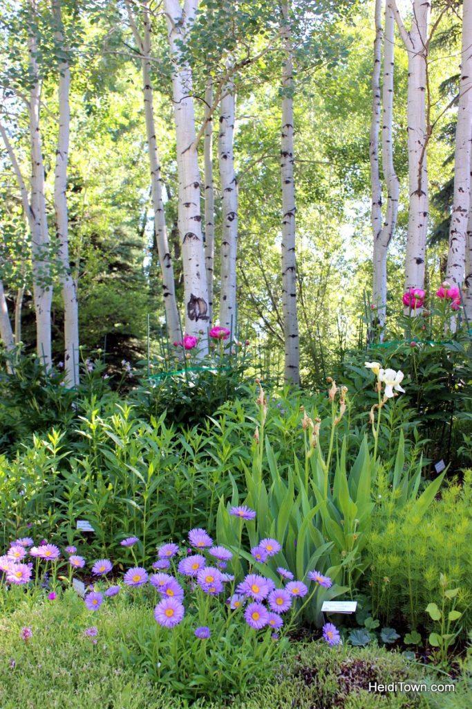 Let's Go Ride Bikes 3 Easy Bike Paths in Colorado. Steamboat Springs. HeidiTown (2)