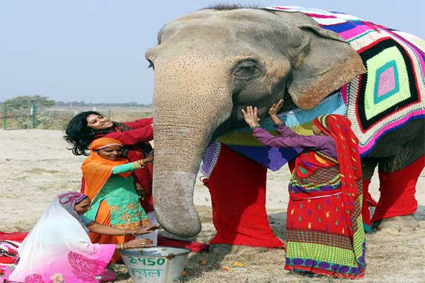 Freezing temperatures protect elephants women knitted colorful woolen super-size garments.