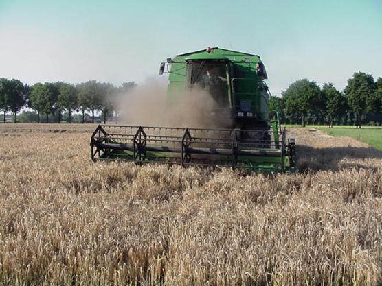 De Combine is de zomertarwe aan het oogsten. De korrels worden eruit geschud en opgevangen in een silo.