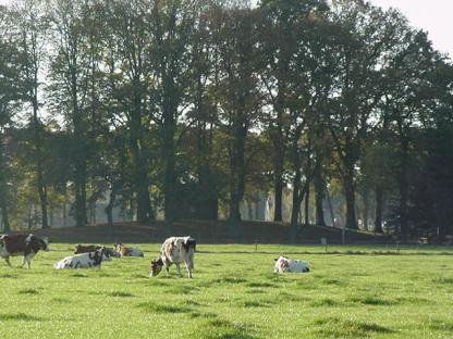 Monumentale beplanting met hoog opgaande zomereik en Hollandse linde