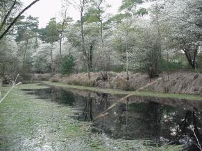 Ven in Leendebos, voorjaar 2005