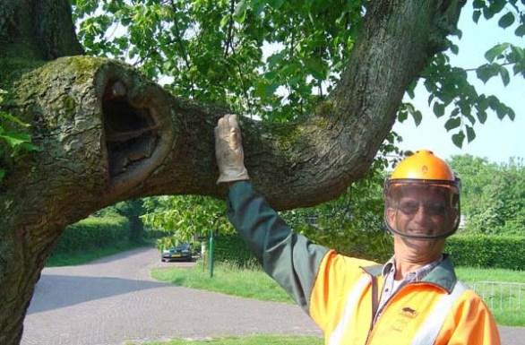 1 boomzager erik van asten