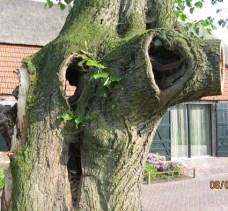 5 lindeboom leende erik van asten
