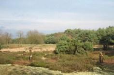 De jeneverbessen staan weer in het zonnetje