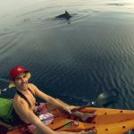 LA Tourism - LA Story Commercial Dolphins swimming next to kayakers
