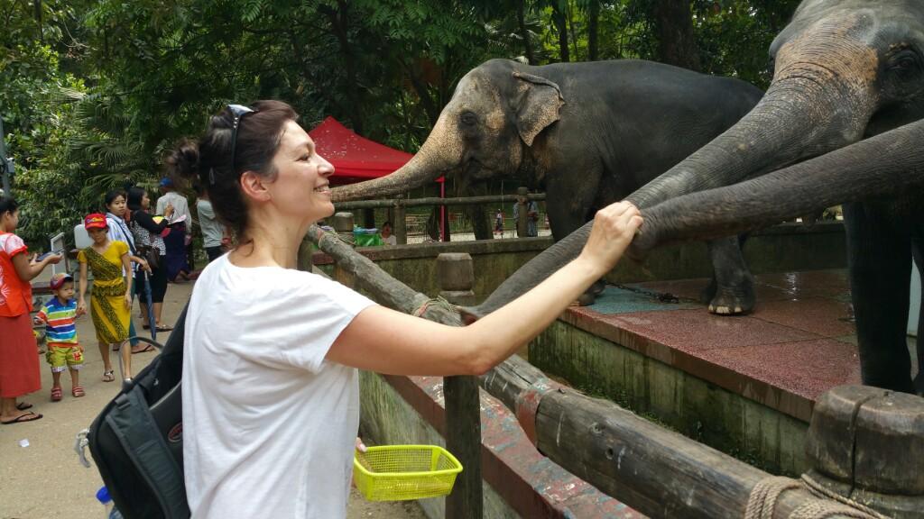 Myanmar – Tag 17 Zoo in  Yangon und Heimreise