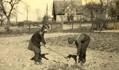 Düh137 09 1950 Gerlach, Schweer, BraunWaltraut verh Wittenberg Siegfried