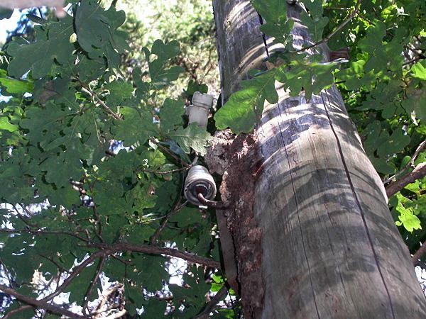 Isolatoren am Baum nahe der Waldklause