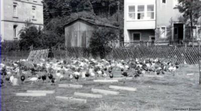 Putenzucht im Forstamt Einsiedel