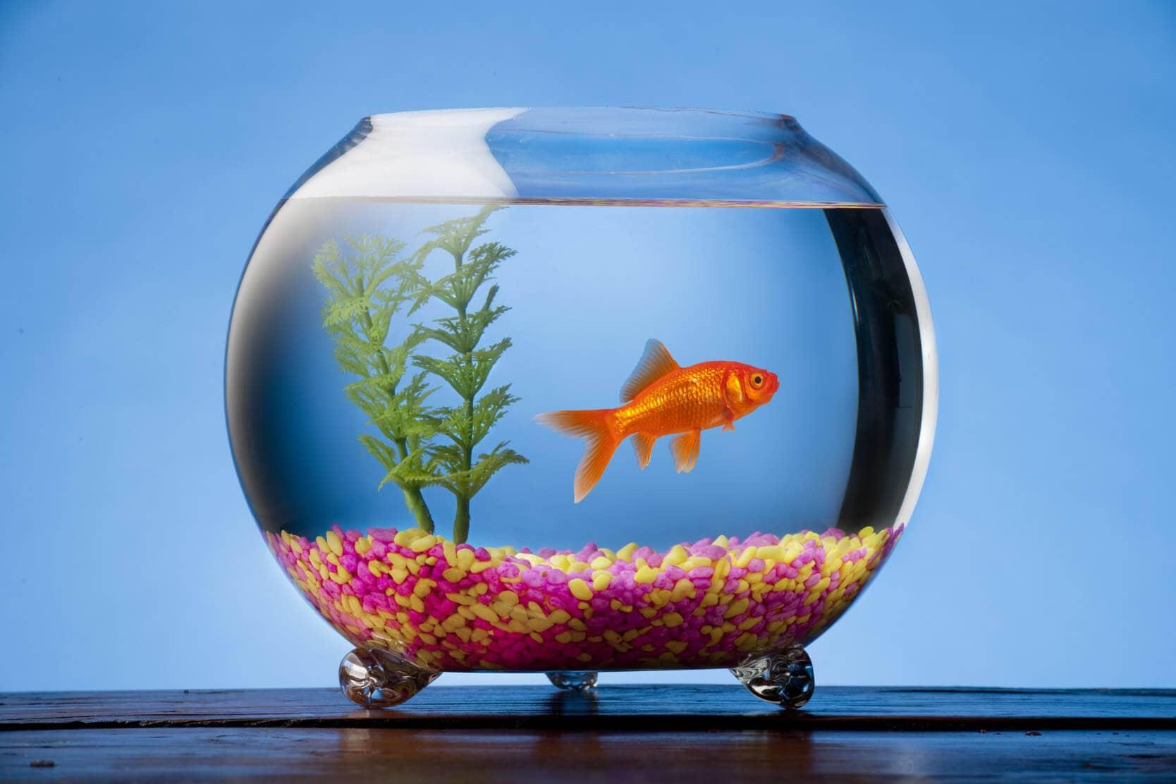 Aquarium im Urlaub Fr die Abwesenheit vorsorgen  HeimHelden