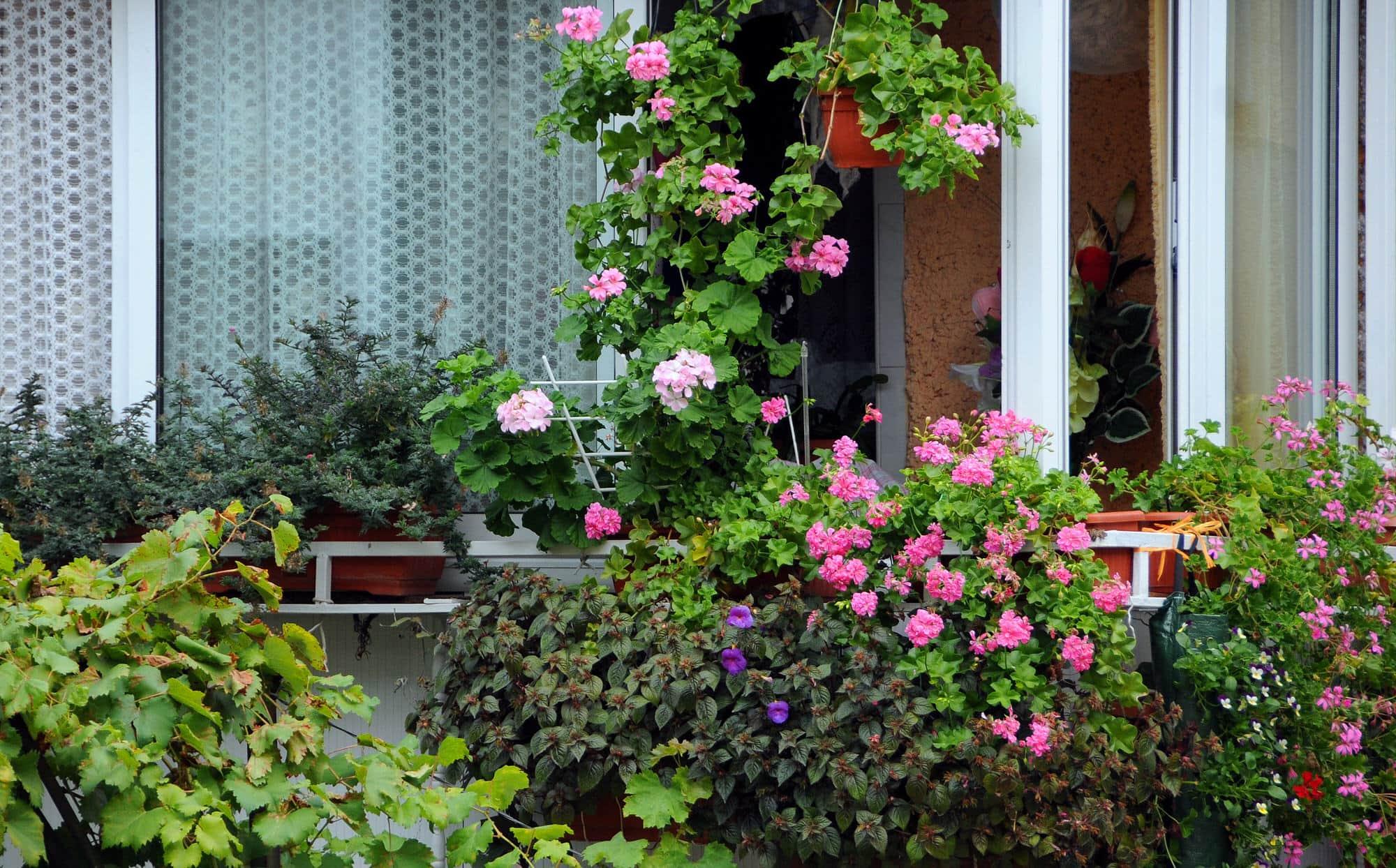 Balkonpflanzen ganzjhrig  HeimHelden