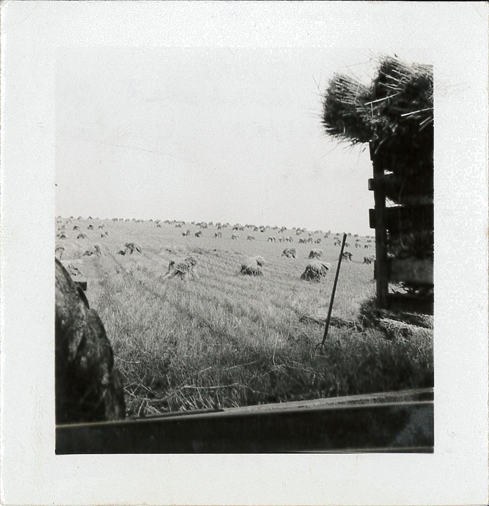 Dean Fullerton's wheat fields while harvesting, 1947.