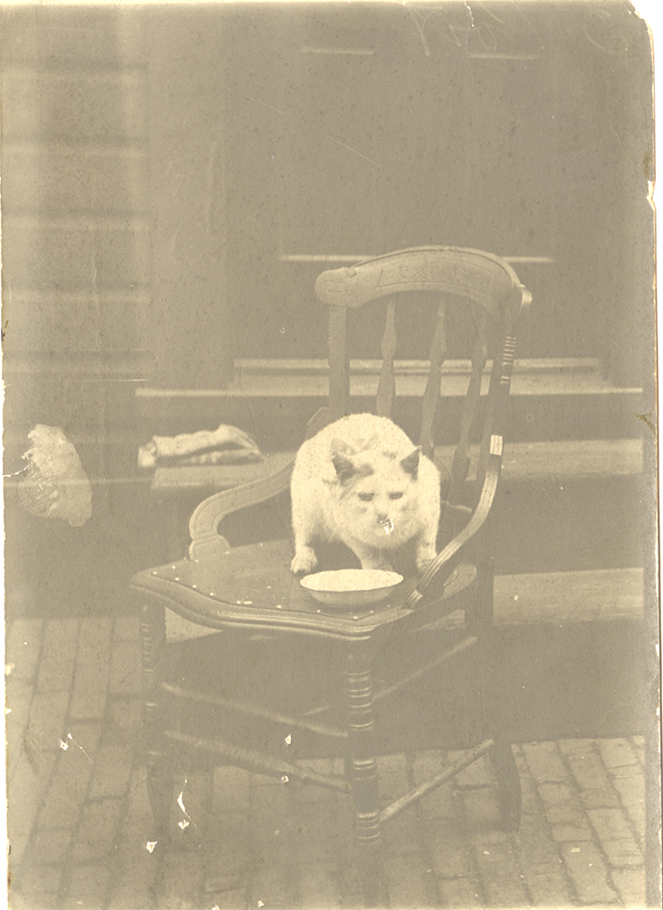 """Like most cats of the time, """"Jacko"""" the Jones & Laughlin """"out cat"""" was probably kept around mainly for pest control, c. 1900s. Jones and Laughlin Steel Company Photographs, MSP 33, Detre Library & Archives at the History Center."""