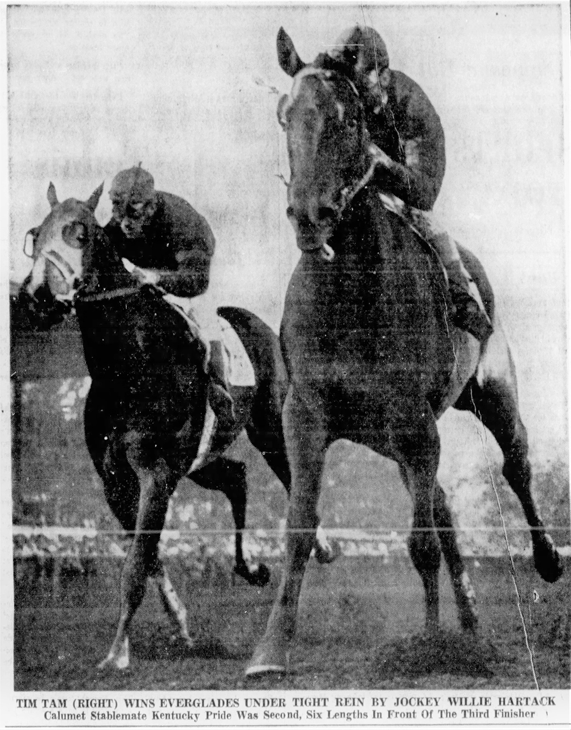 Tim Tam with Bill Hartack up, winning the Everglades Stakes, February 16, 1958. Hartack was looking forward to another record-breaking year at the beginning of 1958. From the Miami News, February 16, 1958.