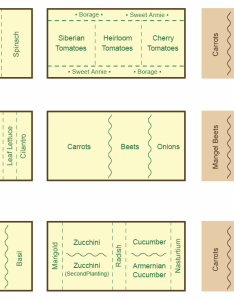 Companion planting garden map also chart and guide gardening rh heirloom organics