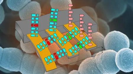 Resistente Bakterien schneller erkennen