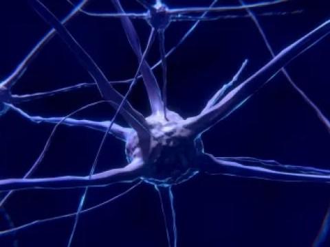 Gehirnstimulation gegen Zwangsstörungen