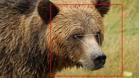 Bilderkennung kann Bären auseinanderhalten