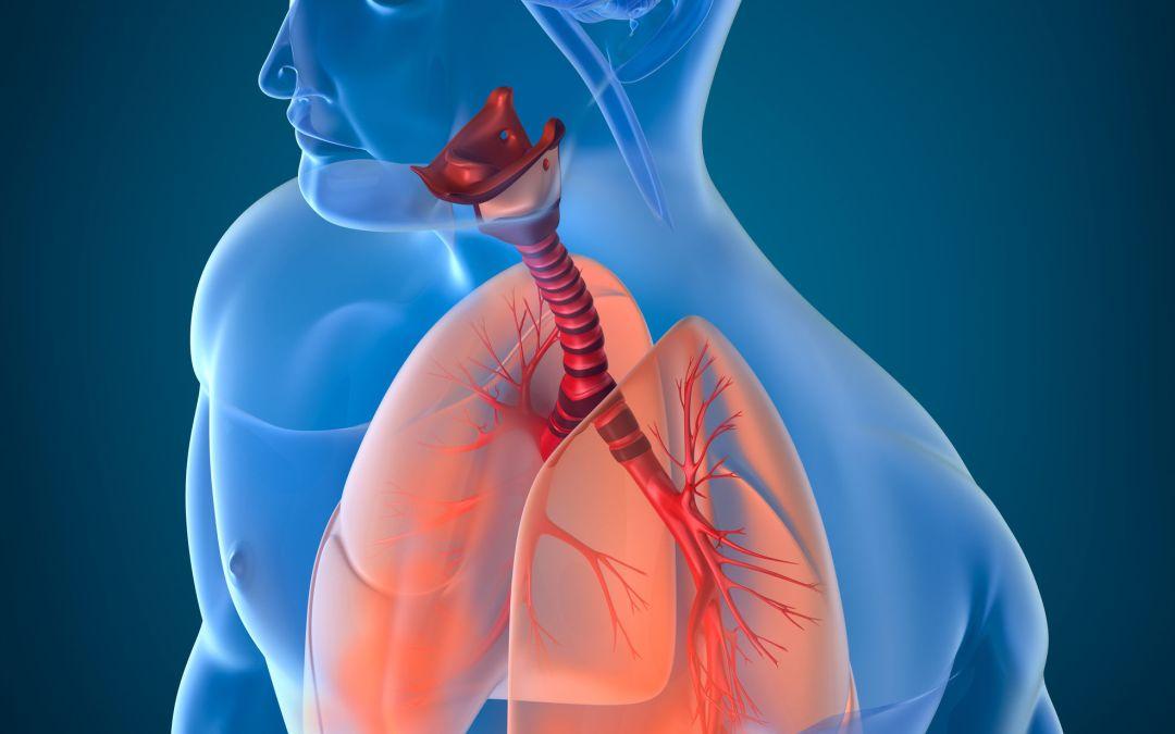 Taller Feldenkrais Zoom: «Liberar hombros y mejorar respiración» Domingo 28 Marzo 10h a 13h