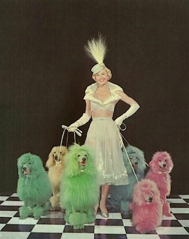 chiens couleur.jpg